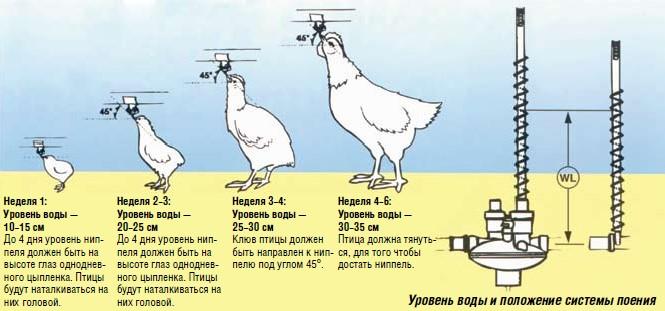 poilki-dlyakur-svoimi-rukami_3