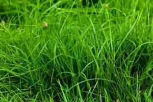 Сочная трава