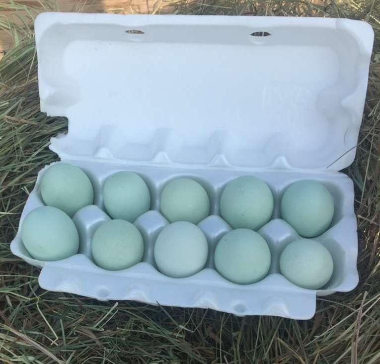 Яйца Ухейилюй