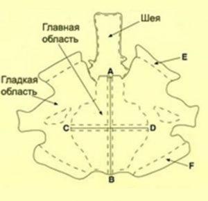 страусиная шкура